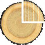 Standard Flooring Saroyan Hardwoods Quartersawn Diagram 150x150
